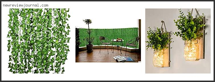 Best Plants For Green Wall