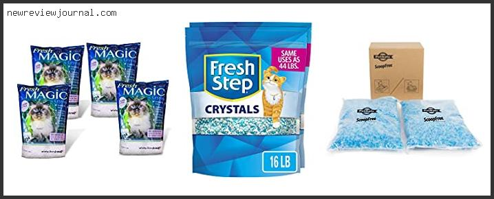 Guide For Fresh 4 Life Cat Litter With Expert Recommendation